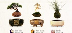 Air-Bonsai-variations-1