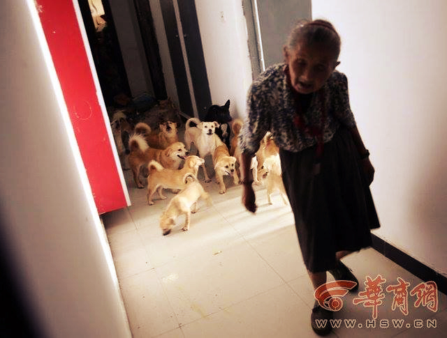 granny with dogs2