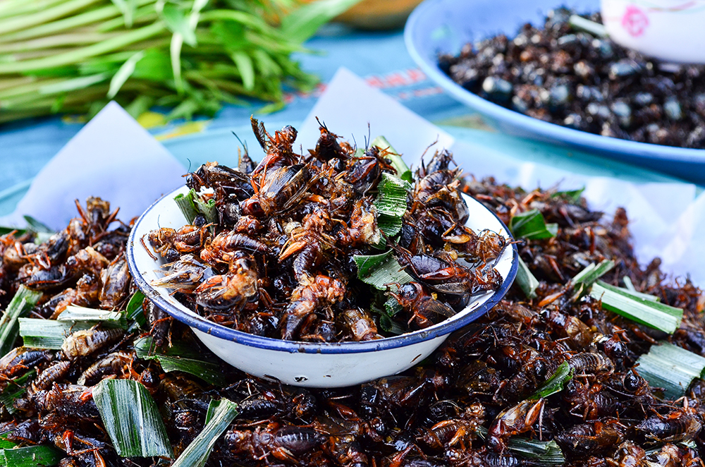 Fried insect snack